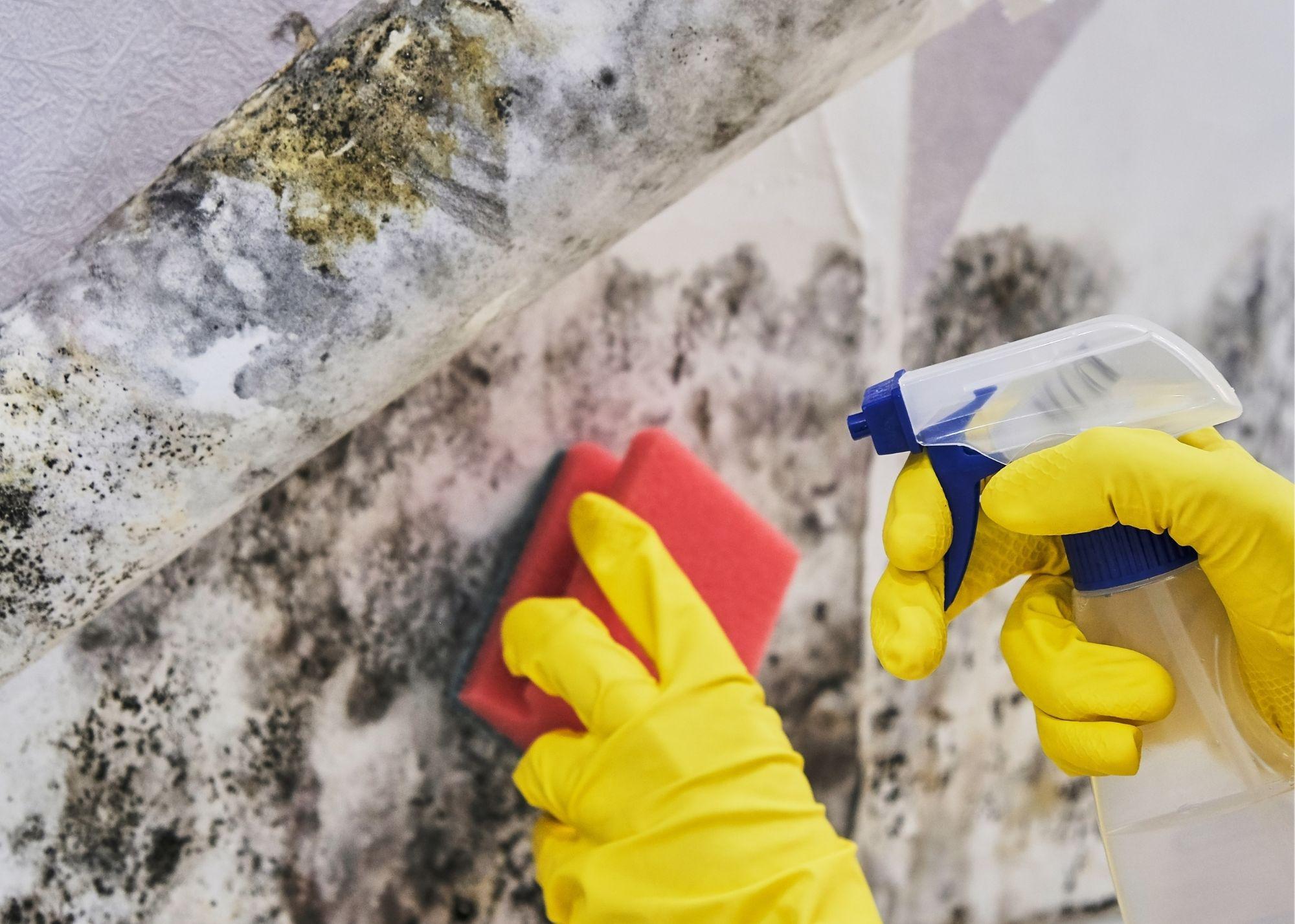 mold remediation Philadelphia PA