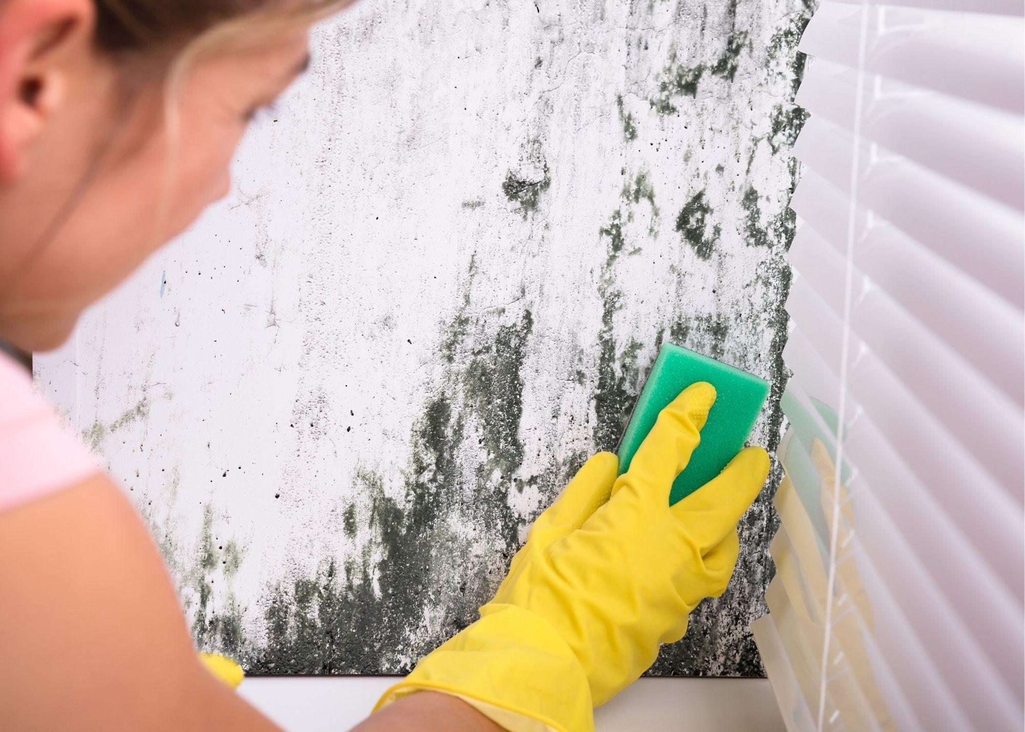 mold removal in Philadelphia PA
