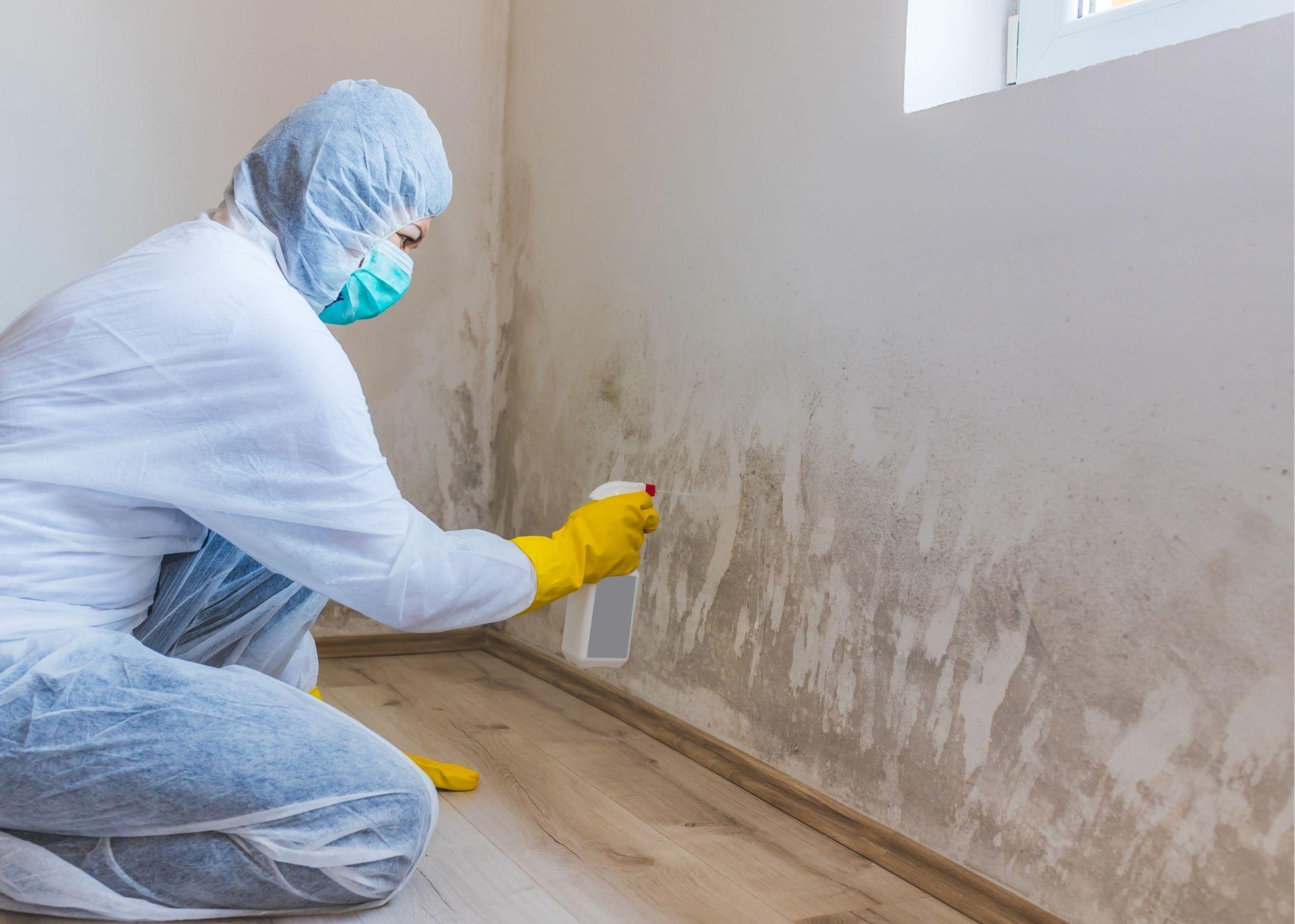 mold removal Philadelphia